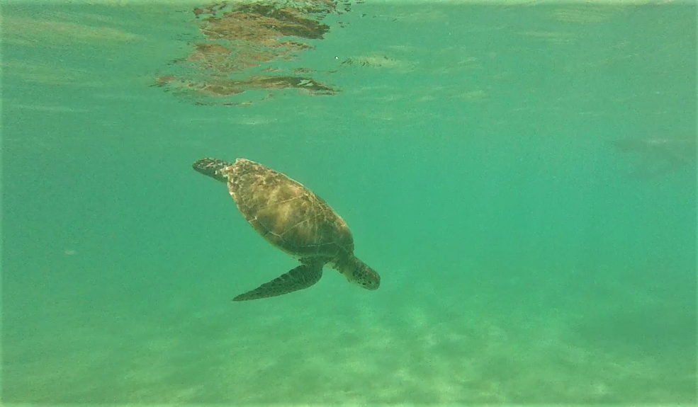 Snorkeling with turtles in Akumal - Tulum Solo Travel Guide