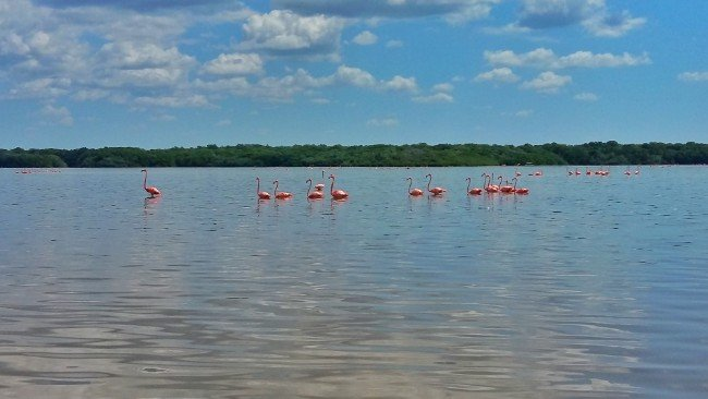 Watching Flamingos at Celestun Nature Reserve - 2 Weeks in Mexico